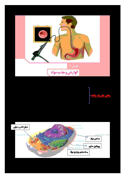 جزوه جمعبندی زیست شناسی دهم رشته تجربی   فصل دوم: گوارش و جذب مواد
