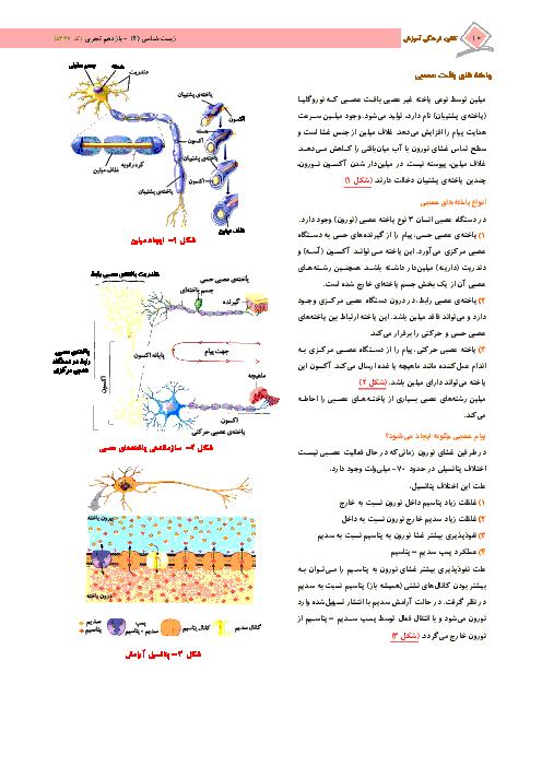 درسنامه آموزشی + 120 تست زیست شناسی (2) پایه یازدهم رشته تجربی | فصل 1: تنظیم عصبی