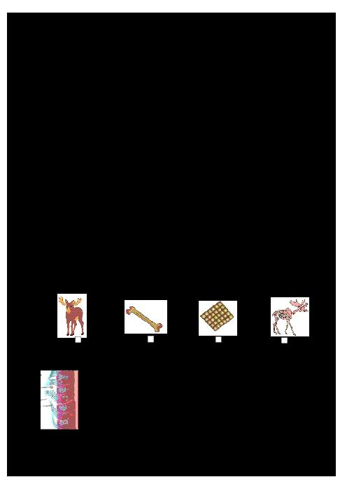 امتحان نوبت اول زیست شناسی (1) دهم رشته تجربی دبیرستان دخترانۀ گزینه جوان مهر اصفهان | دی 96