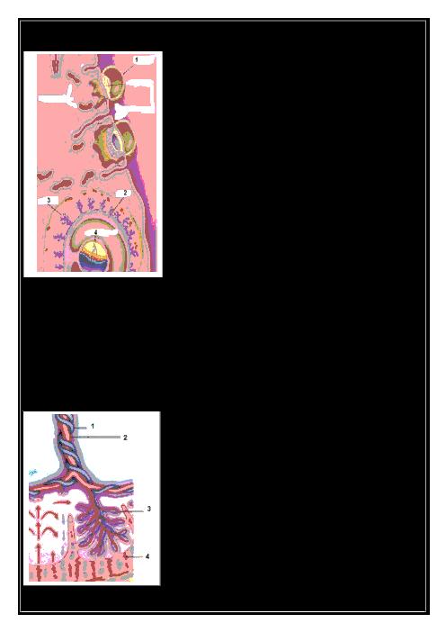 آزمونک زیست شناسی (2) پایه یازدهم رشته تجربی | فصل هفتم - گفتار 3: رشد و نمو جنین