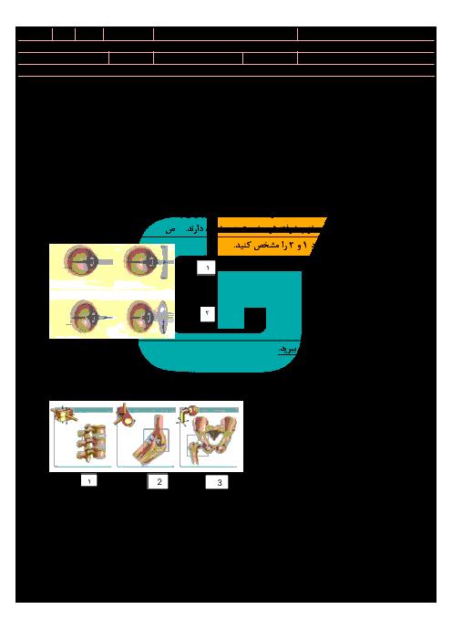 سوال امتحان نوبت دوم زیست شناسی (2) تجربی پایه یازدهم دبیرستان سیدالشهداء | ویژه خرداد 97