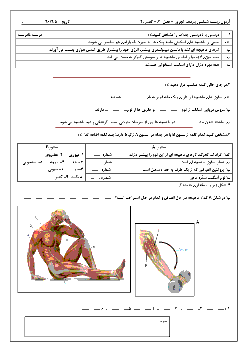 آزمون زیست شناسی (2) یازدهم رشته تجربی | فصل سوم (گفتار 2: ماهیچه و حرکت)