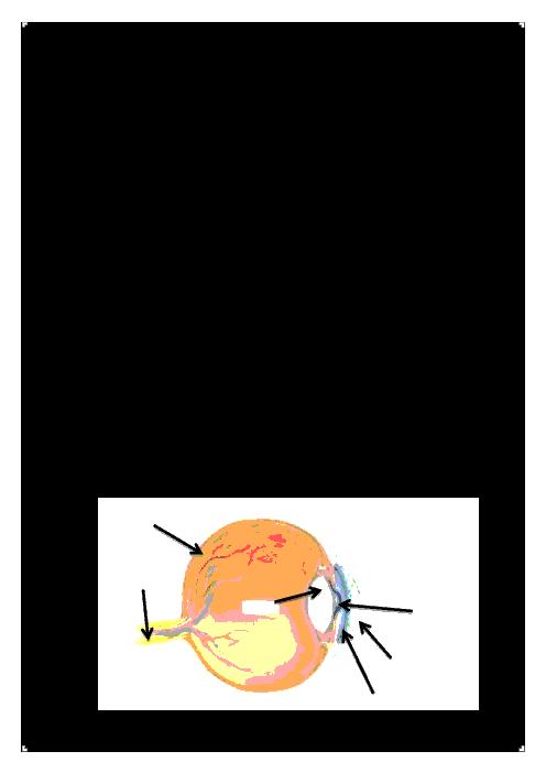 آزمونک علوم تجربی پنجم دبستان نور مهر | درس 6: چه خبر؟ (1)