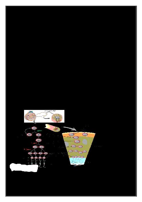 جزوه زیست شناسی (2) یازدهم تجربی | فصل هفتم- تولید مثل