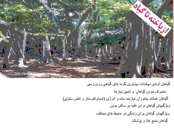 جزوه جمعبندی زیست شناسی (1) دهم رشته تجربی | فصل ششم: از یاخته تا گیاه