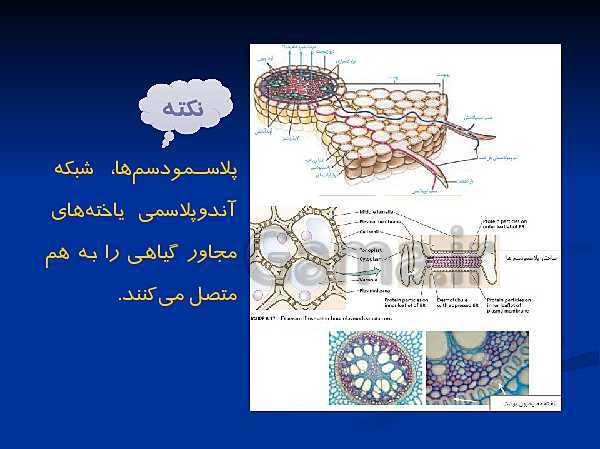 پاورپوینت تدریس زیست شناسی دهم تجربی | گفتار 3 از فصل 7: انتقال مواد در گیاهان- پیش نمایش