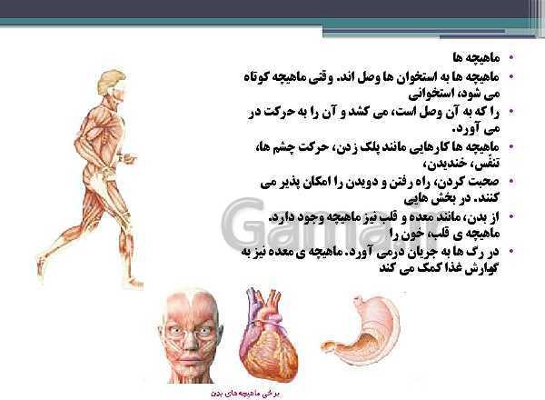 پاورپوینت تدریس درس 5 علوم پنجم دبستان | حرکت بدن- پیش نمایش