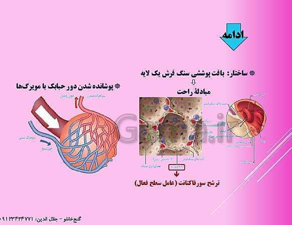 پاورپوینت گفتار 1 از فصل سوم زیست شناسی دهم تجربی | ساز و کار دستگاه تنفس در انسان- پیش نمایش