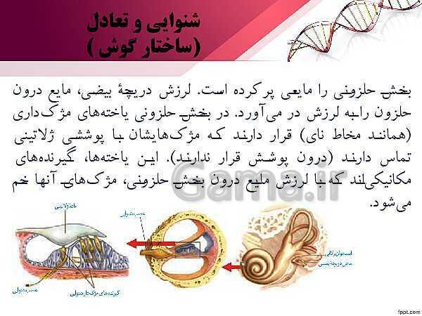 پاورپوینت تدریس زیست شناسی (2) یازدهم تجربی | فصل 2: حواس (گفتار 2: حواس ویژه)- پیش نمایش