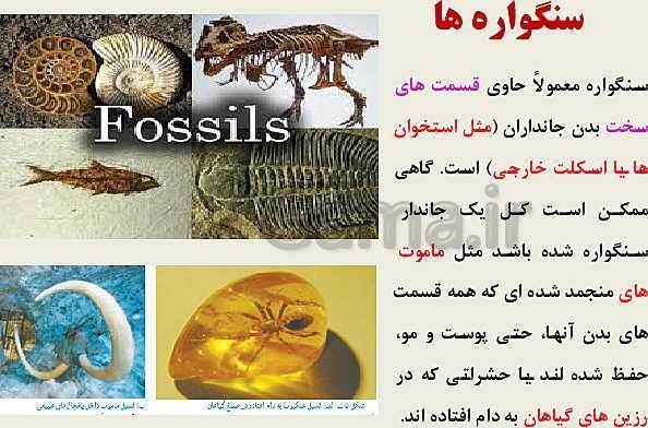پاورپوینت زیست شناسی (3) دوازدهم دبیرستان | فصل 4: تغییر در اطلاعات وراثتی (گفتار 1 و 2 و 3)- پیش نمایش