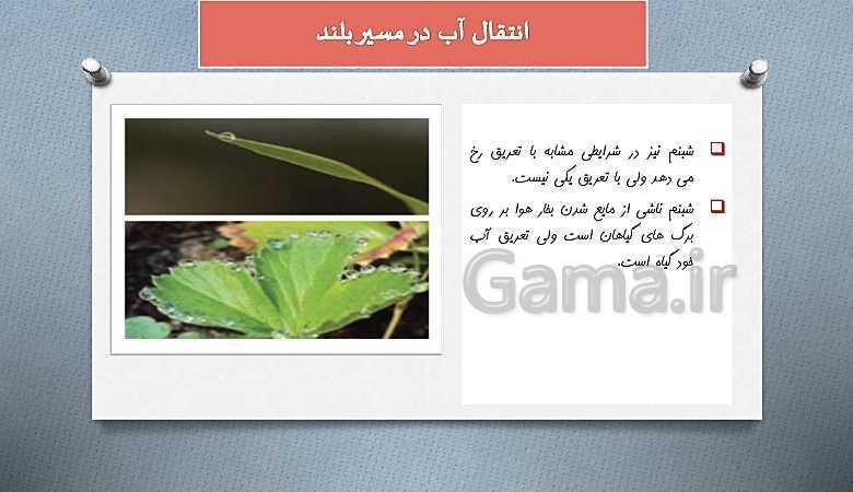 پاورپوینت گفتار 3 زیست شناسی دهم تجربی | انتقال مواد در گیاهان- پیش نمایش