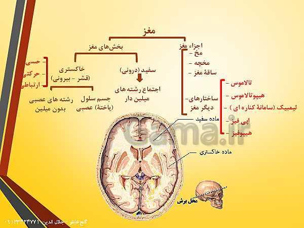 پاورپوینت زیست شناسی یازدهم تجربی | فصل 1: تنظیم عصبی (گفتار 2: ساختار دستگاه عصبی)- پیش نمایش