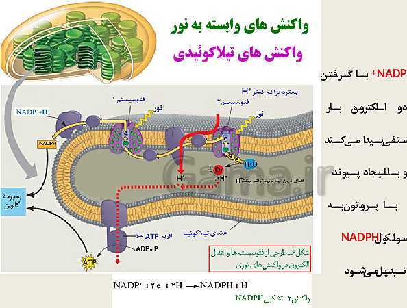 پاورپوینت زیست شناسی (3) دوازدهم تجربی | فصل 6: از انرژی به ماده (گفتار 1 و 2 و 3)- پیش نمایش