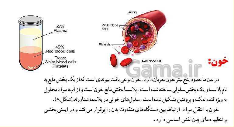پاورپوینت علوم تجربی هفتم | دستگاه گردش خون- پیش نمایش