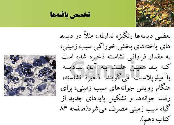 پاورپوینت تدریس زیست شناسی (2) یازدهم تجربی | فصل 8: تولید مثل نهان دانگان (گفتار 1: تولید مثل غیرجنسی)- پیش نمایش