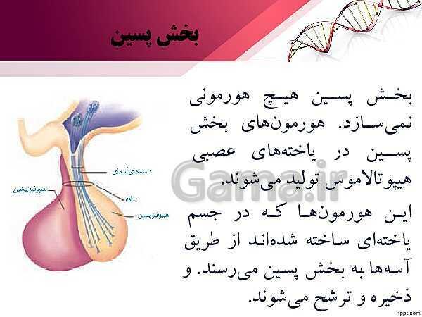 پاورپوینت تدریس زیست شناسی (2) یازدهم تجربی | فصل 4: تنظیم شیمیایی (گفتار 2: غدههای درونریز)- پیش نمایش