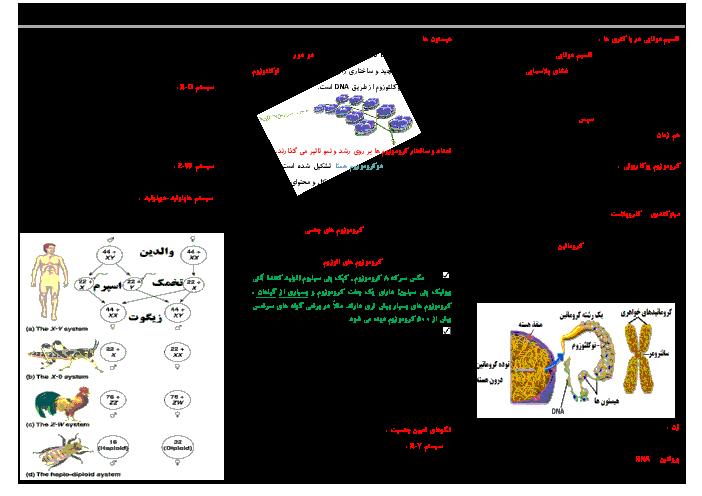 جزوه جمعبندی زیست شناسی (2) پایه یازدهم رشته تجربی | تقسیم میوز و میتوز