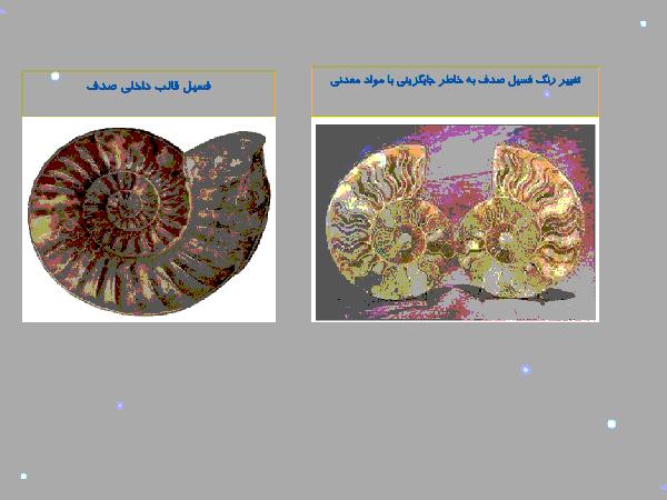 پاورپوینت تحقیق جمع آوری اطلاعات علوم نهم: تصویر نمونه هایی از فسیل جانداران - پیش نمایش