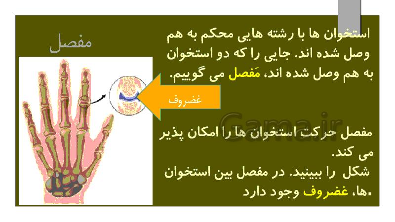 پاورپوینت علوم تجربی پنجم دبستان | درس 5: حرکت بدن- پیش نمایش