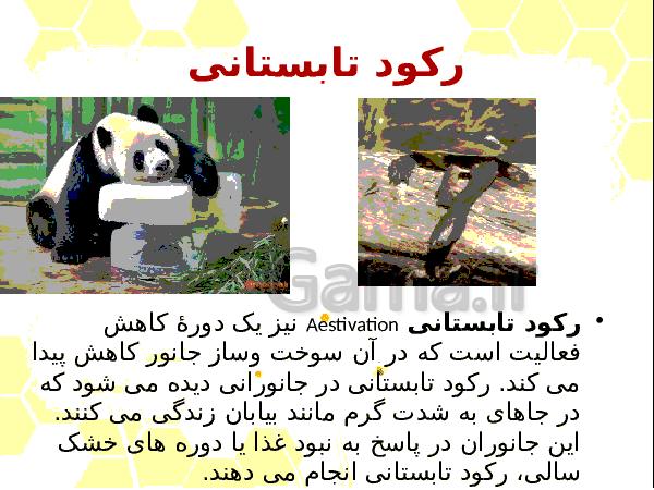 پاورپوینت فصل 8 زیست شناسی دوازدهم تجربی | رفتارهای جانوران- پیش نمایش
